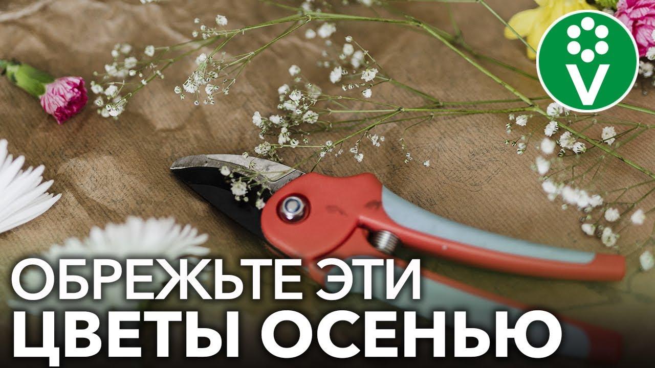 КАКИЕ МНОГОЛЕТНИКИ СТОИТ ОБРЕЗАТЬ ОСЕНЬЮ, а какие лучше вообще не обрезать?
