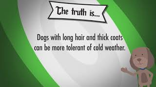 My Pet Has A Thick Coat - Will They Be Warm Enough In Winter Weather?