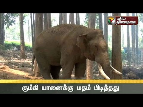 Kumki-elphant-Jambu-turns-agressive-in-Nilgiri