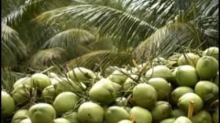Banglar Krishi Episode no 347  (Dwarf Coconut+ Milking Cow)