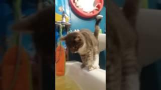 Эпик фейл - Котяра шмякнулся в наполненную ванну