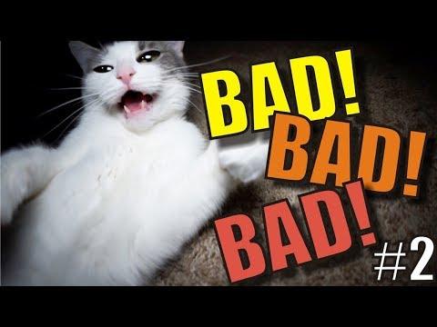 Talking Kitty Cat - BAD! BAD! BAD!