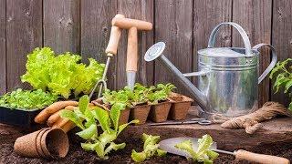 4 Tumbuhan Ini Bisa Kamu Tanam di Halaman Rumah saat Musim Kemarau Datang