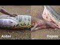 big snake inside latest news
