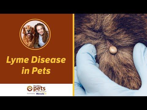 Video Lyme Disease in Pets