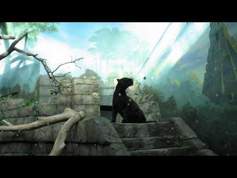 Helucze - Black Spectre - Shivelight - Video - Index Music
