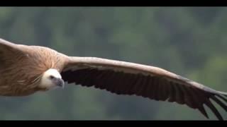 Geovanna Leal  Como las Aguila