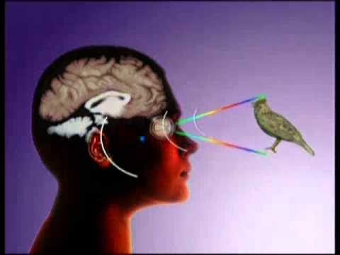 Болит голова от очков для зрения