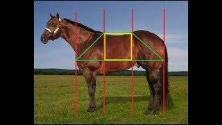 3 - (Part 1) Judging Halter - PA 4-H Equine Knowledge Contest