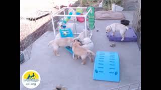 Canine Companions Puppy Cam