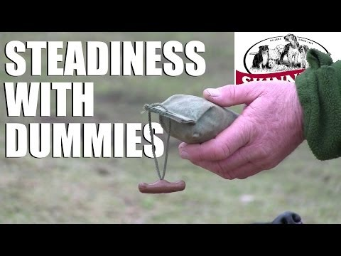 Gundog training tips – Steadiness with dummies