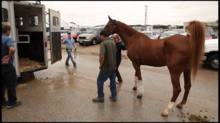 How To Load Yearling Horses On A Trailer - Video By The Horse Riding Channel