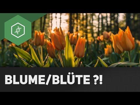Blume oder Blüte: Was ist der Unterschied?!