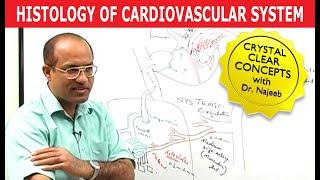 Histology of Cardiovascular System
