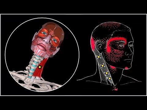 Cervicale della colonna vertebrale scimmia