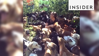 A Costa Rican park is home to hundreds of friendly dogs