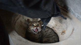 農村小夥收養超兇小野貓5個月了,妳們覺得它有變化嗎