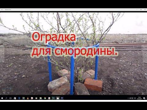 Оградка для СМОРОДИНЫ, подвязка кустов