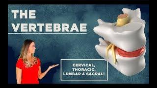 The Vertebrae