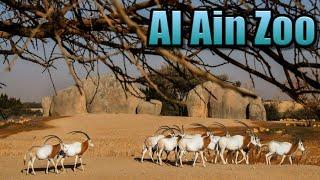 Al Ain Zoo  -  Dubai United Arab Emirates