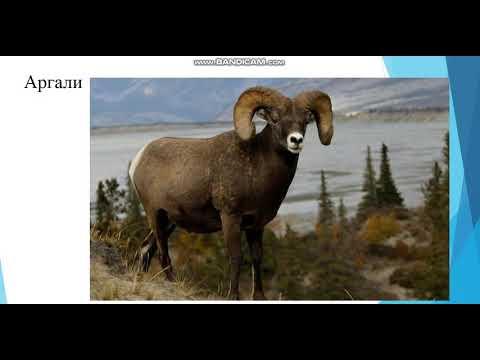 , title : '2 курс Зоотехния  Происхождение овец