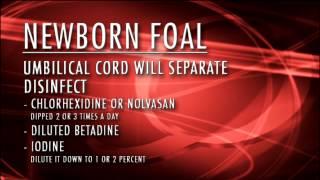 Newborn Foal Care