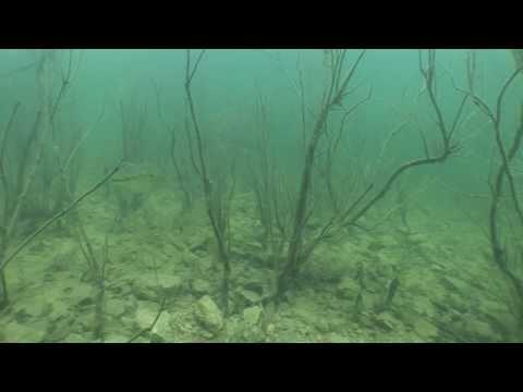 Fishing Fluorocarbon Line In Clear-Water Brush – Hook n' Look Splash #25