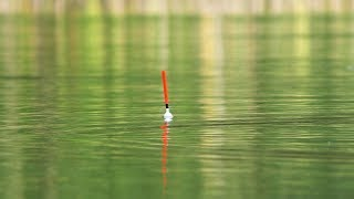 ЗАКИНУЛ УДОЧКУ В ЛУЖУ И СРАЗУ ПОТЯНУЛА ПОПЛАВОК рыбалка осенью 2019 на удочку