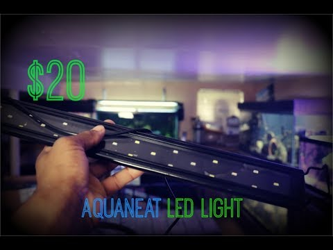The $20 Aquarium Light| Aquaneat LED