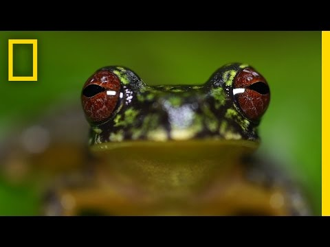 Stunning Close-ups: Meet These Frogs Before They Go Extinct