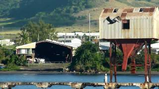 preview picture of video 'A pelican dives in Basseterre Harbor'