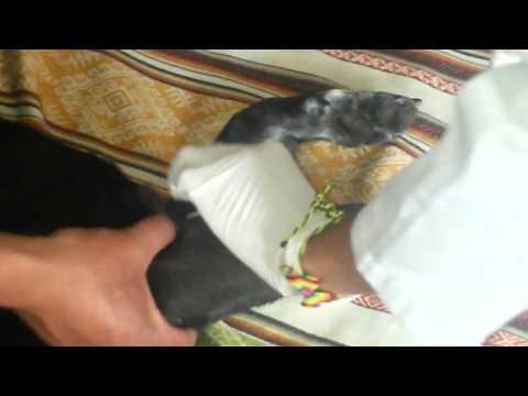 Cómo terminar de hacer el masaje de la próstata