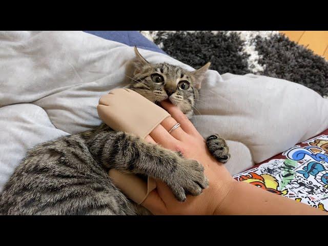 生まれたての子猫って肩凝りします?