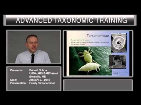 Introduction to the family Tarsonemidae