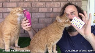 Deworming Pills: How To Get Your Cat To Take It