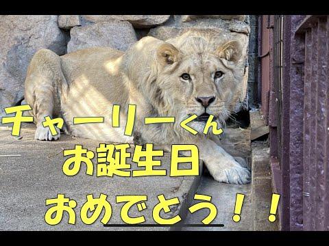 【池田動物園公式】☆★チャーリーくんの誕生日イベント★☆