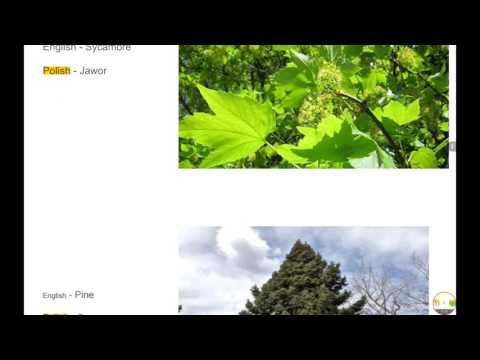 Snowflake & Clover Intro Video