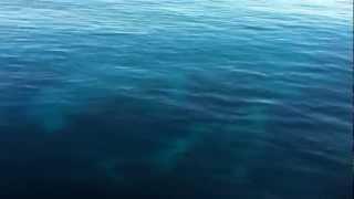 preview picture of video 'IM0LDV San Pietro Island EU-165 DXpedition ARI Vinci'