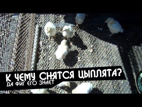 К чему снятся маленькие цыплята женщине?