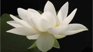 White Tara Mantra (108 Repetitions)