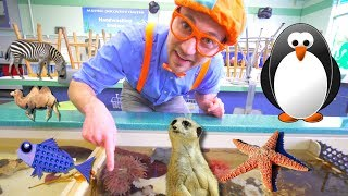Blippi at the Zoo | Learn Animals for Children and Toddlers