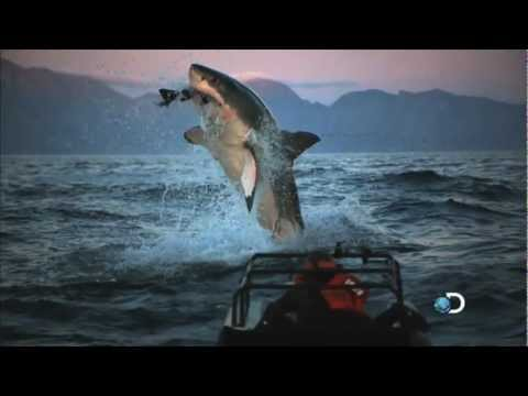 Commercial for Shark Week (2012) (Television Commercial)