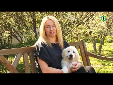 Собачья школа с Нюшей. Выпуск от 29.05.2016 г.