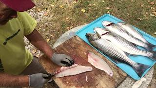 How To Fillet A Striped Bass The Old Fisherman's Way