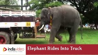 Elephant rides in the truck!