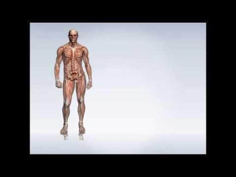 Pirogenal nel trattamento della prostatite recensioni