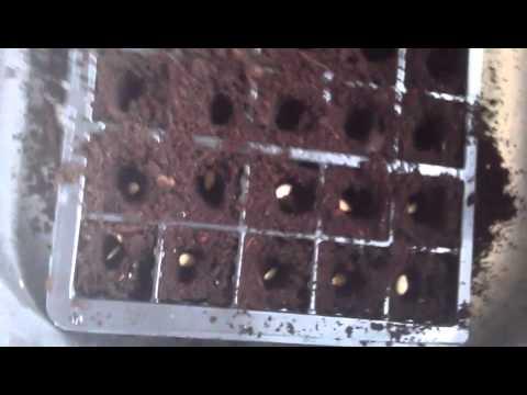 Mga pagbabago sa dugo kapag ang mga parasito