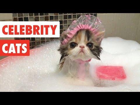 אוסף של חתולים חמודים שעושים דברים בלתי נשכחים