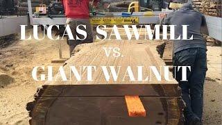 Slabbing a GIANT walnut log using a Lucas Sawmill!!!