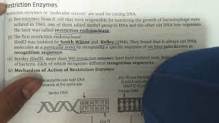 Restriction Enzyme Class 12 Biotechnology